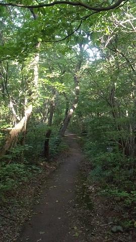 森の写真.JPG